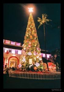 12 Rolls of Film - December 2012
